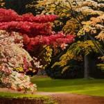 Foliage Series - Arboretum 2